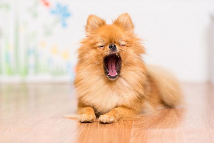 Päť psích mýtov a pravda medzi nimi